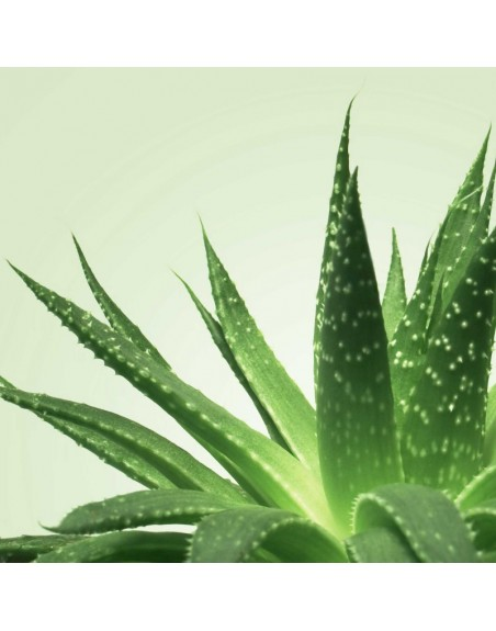 Mixgliss Gel de massage - NU Aloe Vera - 250 ml